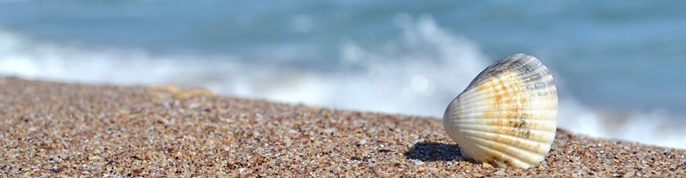 http://emofree.ru/wp-content/uploads/2012/06/stockvault-shell-by-the-beach152315_-960x250.jpg